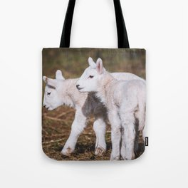 Young Lambs playing on a Field in Spring Tote Bag