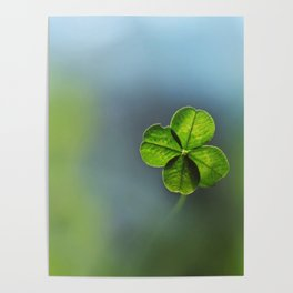 Lucky Four Leaf Clover Poster