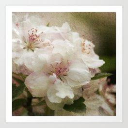 Blossom squared Art Print