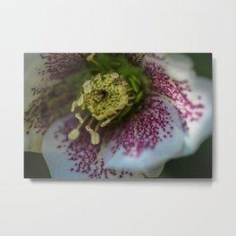 Harvington White Speckled Metal Print