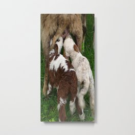 Twin Lambs Suckling From Their Mother Metal Print