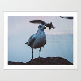 Seagull #1 Art Print