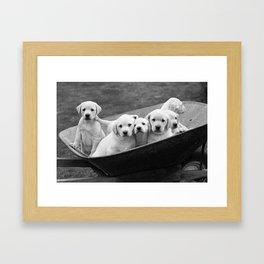 Labs Puppies In A Wheelbarrow Framed Art Print