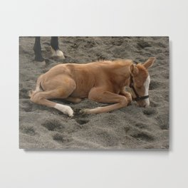 fuzzy yellow foal Metal Print