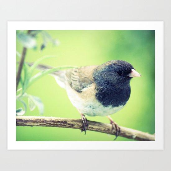 bird 002 Art Print