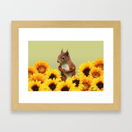 Squirrel in Sunflower Blossoms Field Framed Art Print