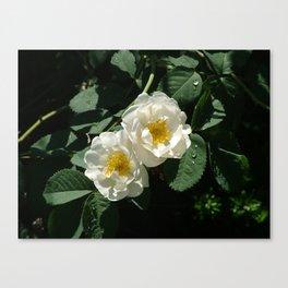 Flower Pic 3 Canvas Print