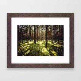 FOREST - Landscape and Nature Photography Framed Art Print