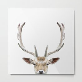 Deer Head Metal Print