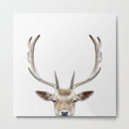 Deer Head Metal Print