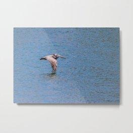 Pelican! Metal Print