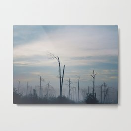 069 | bastrop state park Metal Print