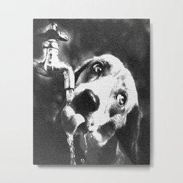 Thirsty dog Metal Print