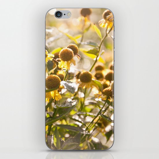 Flowers in Mt. Rogers, Virginia iPhone & iPod Skin