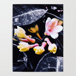 black and white leaves pink yellow white flowers jasmine Poster
