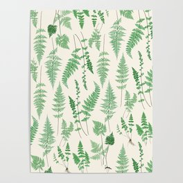 Ferns on Cream I - Botanical Print Poster