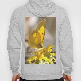 Sulphur Butterfly Imbibing Hoody
