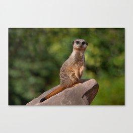 Meerkat keeping watch Canvas Print