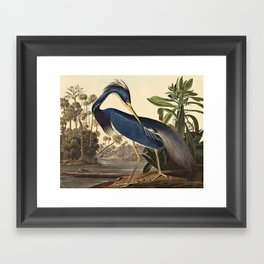 John James Audubon - Louisiana Heron Framed Art Print