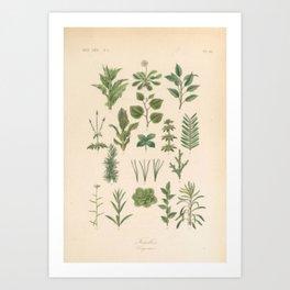 Botany Chart Art Print