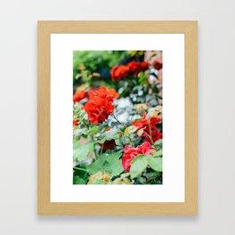 Giverny Framed Art Print