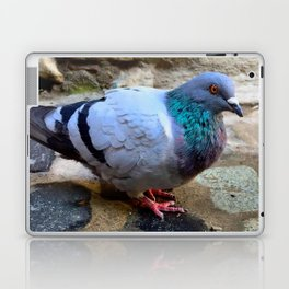 Pigeon in Girona, Spain Laptop & iPad Skin