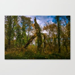 Forest guard Canvas Print