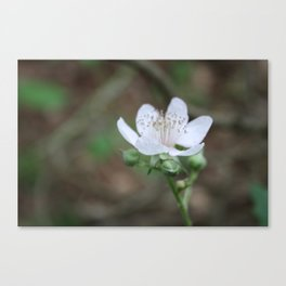 Light Pink Canvas Print