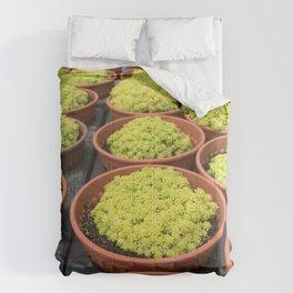 Close up shot of Mini Moss Pot at Cameron highlands Cactus Point . Comforters