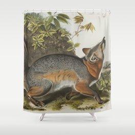 Vintage Illustration of a Grey Fox (1843) Shower Curtain