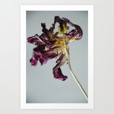 Last Dance Tulip Art Print