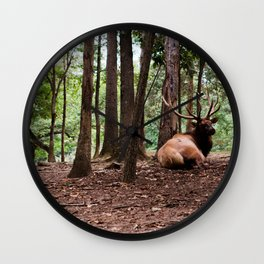 Elk Laying Down in Color Wall Clock
