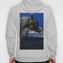 Welsh Pony Stallion Hoody