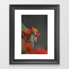 Wings of Nature Framed Art Print