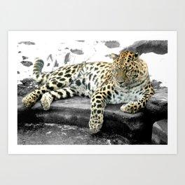 Photography Leopard Cat Art Print