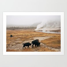 Mother Bison and Calf in Yellowstone National Park Art Print
