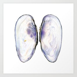 Thick Shelled River Mussel (Unio crassus), inner side Art Print