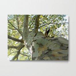 Unique Tree Metal Print