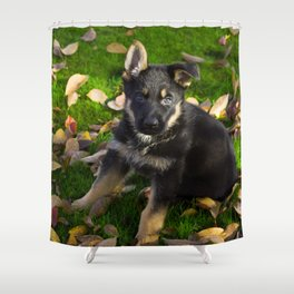 Little German Shepherd puppy Shower Curtain