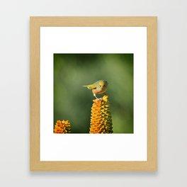 Silvereye King Framed Art Print