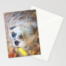 Meerkat Stationery Cards