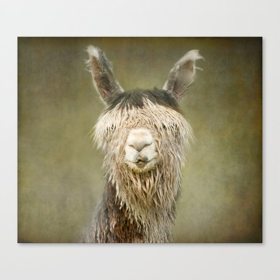 Alpaca with a fringe..! Canvas Print
