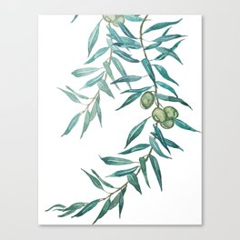 green olive leaf watercolor Canvas Print
