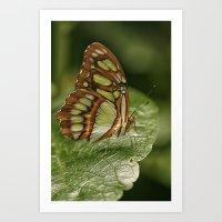 malachite Art Prints featuring Malachite Butterfly by Cindi Ressler Photography