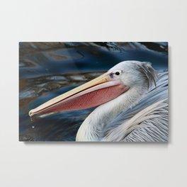 Pink Backed Pelican Metal Print