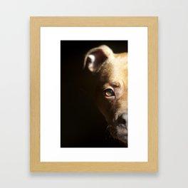Pennie the Pittie Framed Art Print