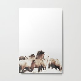 WILD AND FREE 2 - HORSES OF ICELAND Metal Print