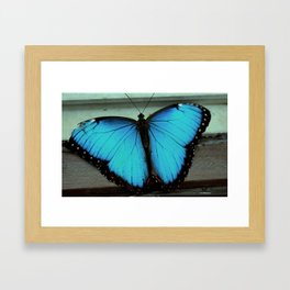 Broken-Winged Butterfly Framed Art Print