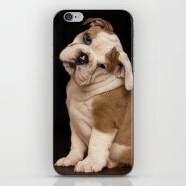 Bulldog Puppy iPhone Skin