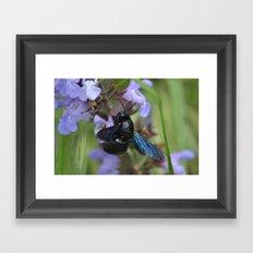 Xylocopa Violacea Framed Art Print
